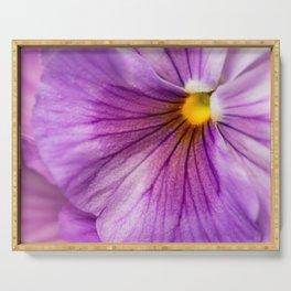 Purple Pansy Flower Close-up #decor #society6 #buyart Serving Tray