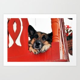 Sad Dog In Red Balcony. Closer Photo Art Print