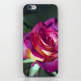 Longwood Gardens - Spring Series 84 iPhone Skin