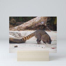 Funny wild racoon feeding in Costa Rica Mini Art Print