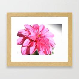 Dahlia in Pink Framed Art Print