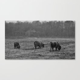 Highland Cows Photo in Black and White Canvas Print