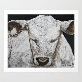 White Calf Art Print