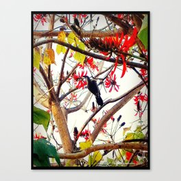 Bird in Coral Tree Canvas Print