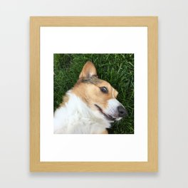 closeup corgi Framed Art Print