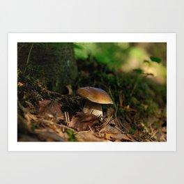 cepe mushroom Art Print