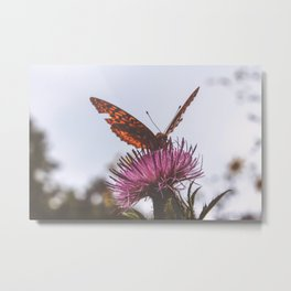 Aphrodite Fritillary Butterfly on Thistle Photography Metal Print