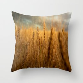 Harvest Time - Golden Wheat in Colorado Field Throw Pillow