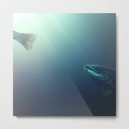 Swimming Salmon Metal Print