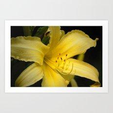 Yellow beauty #2 Art Print
