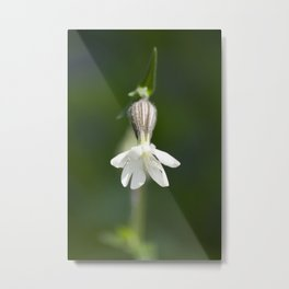 The loverly Bud. Metal Print