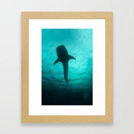 Whale shark silhouette Framed Art Print