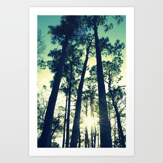 Towering Pines Art Print