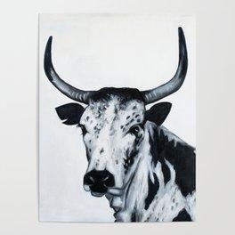 Nguni Bull Poster