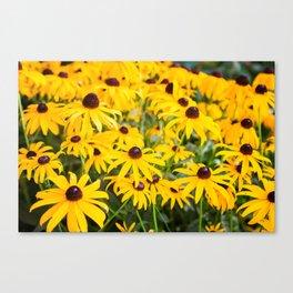 Spot of Sunshine Canvas Print