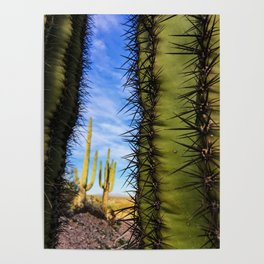 Saguaro Cactus, Arizona Poster