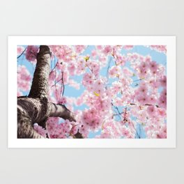 Pink Cherry Blossom Tree Art Print