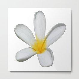 A Single Plumeria Flower Isolated Metal Print
