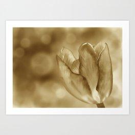 Tulip (Sepia) Art Print