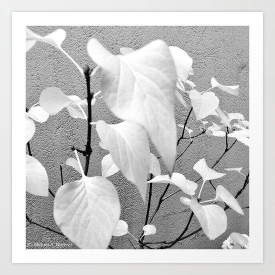Light leaves Art Print