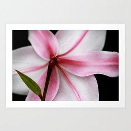 Pink Lily Flower Fine Art Print Art Print