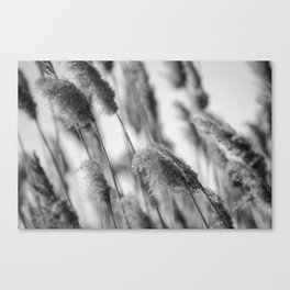 Marsh II Canvas Print