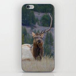 Elk with one antler in Jasper National Park | Canada iPhone Skin