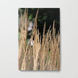 Nature22 Metal Print