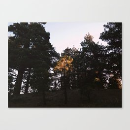 From the Fire Road Canvas Print