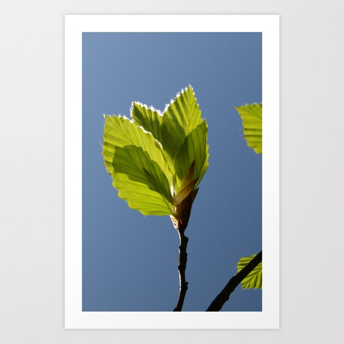 SPRING GREEN BEECH LEAVES Art Print