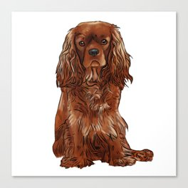 Cavalier King Charles Spaniel - Ruby Canvas Print