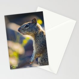 Pensive Squirrel Stationery Cards