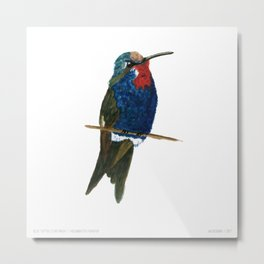 Blue-tufted Starthroat Metal Print