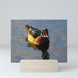 Wood Duck Swimming on Lake Mini Art Print