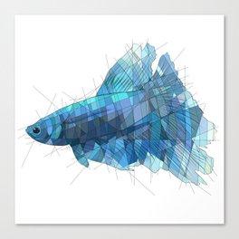 Blue Betta Canvas Print