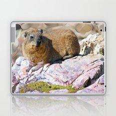 African Rock Hyrax Laptop & iPad Skin