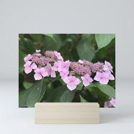 Pink flower in Butchart's Garden Mini Art Print