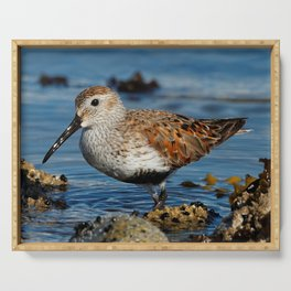 Bird on the Beach / A Solitary Dunlin Serving Tray