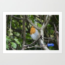 Robin on a branch Art Print