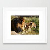 lions Framed Art Prints featuring Lions by U.Cervantes