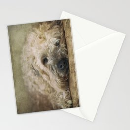 Wheaten Terrier - Let Sleeping Dogs Lie Stationery Cards