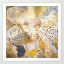 Oak Leaf Art Print