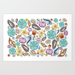 Illustrated Seashell Pattern Art Print