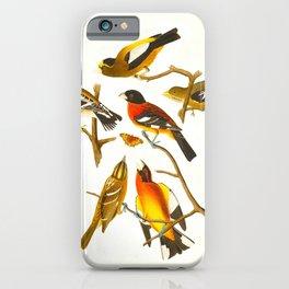 Evening Grosbeak Bird iPhone Case