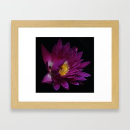 Dahlia Framed Art Print