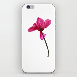 pink cyclamen iPhone Skin