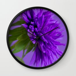 Close-up image of the flower Aster on purple background. Shallow depth of field. Wall Clock