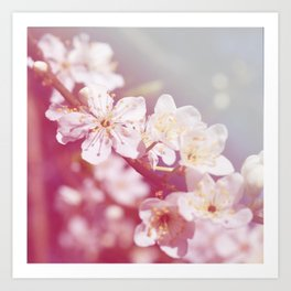 *Pinklight - Plum Blossoms Art Print