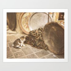 Cats of Morocco Art Print