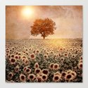 lone tree & sunflowers field (colour option) by vivianagonzlez